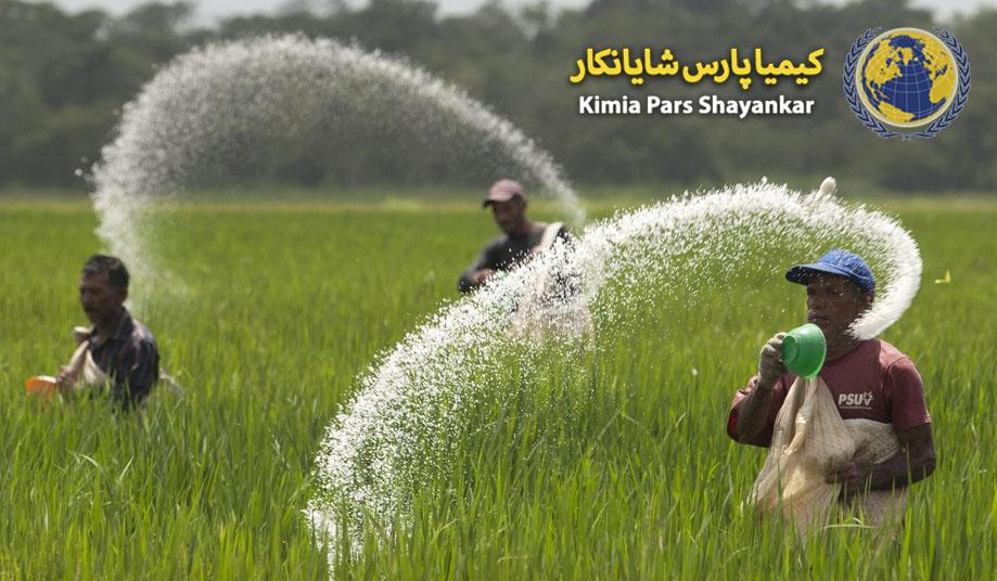 کود برنج
