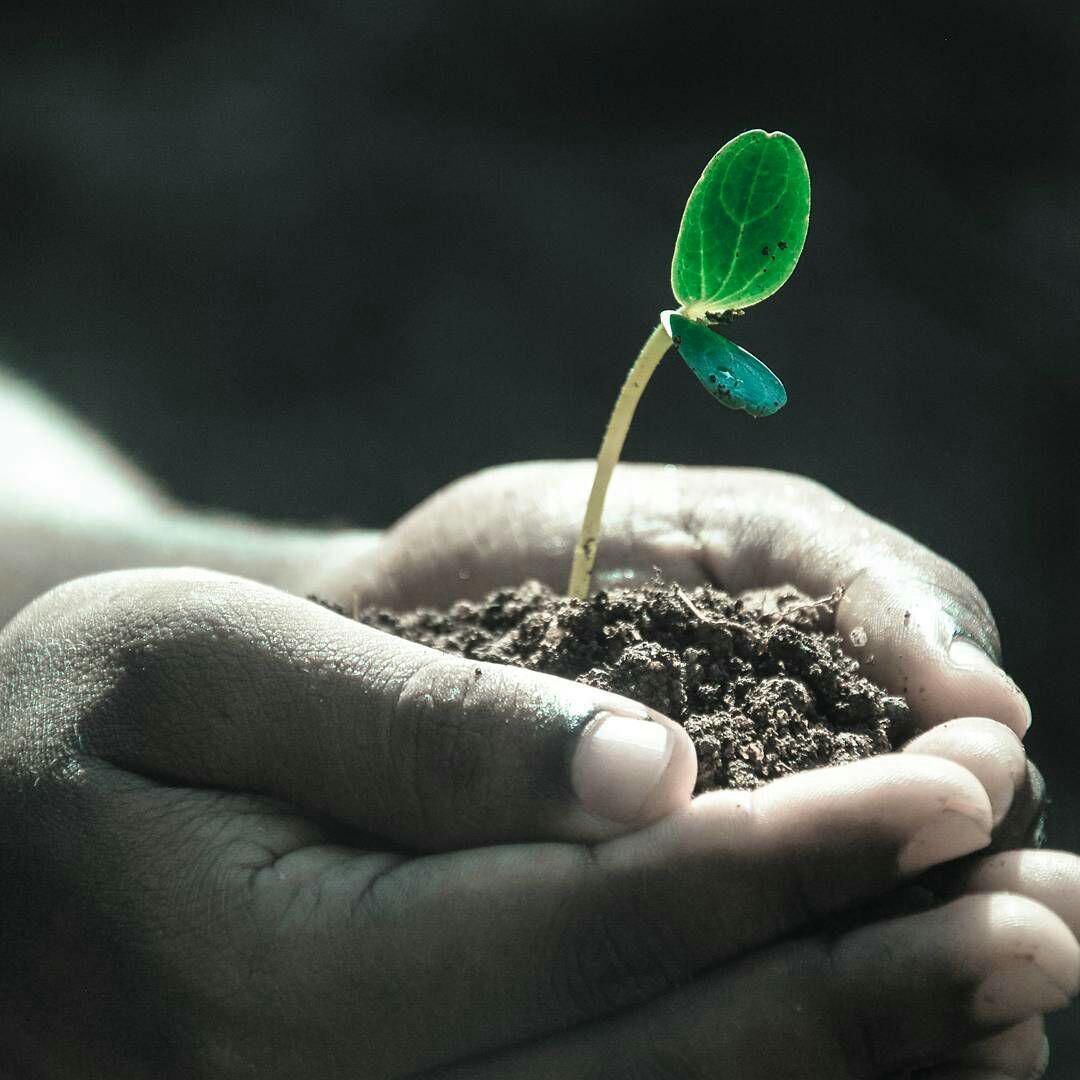عناصر مغذی مورد نیاز گیاهان